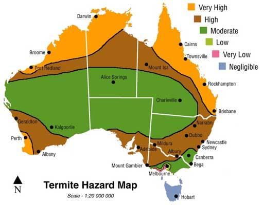 termite risk